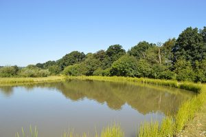 orchard-place-farm-lakes-silver-02